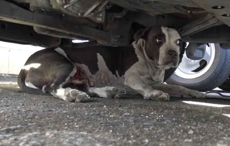 cane vonce tumore cenrca famiglia