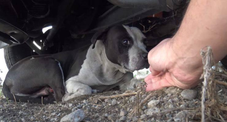 cane con tumore cerca famiglia