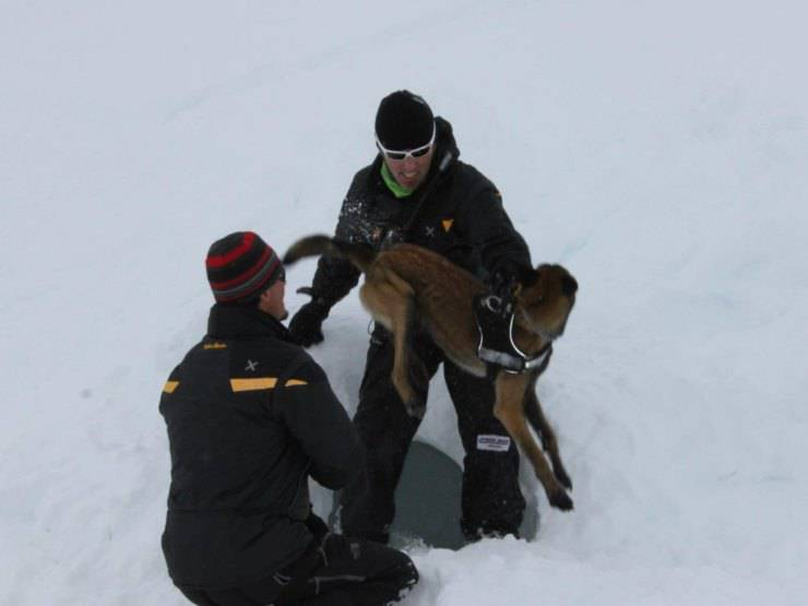 cane 16 giorni ghiacci