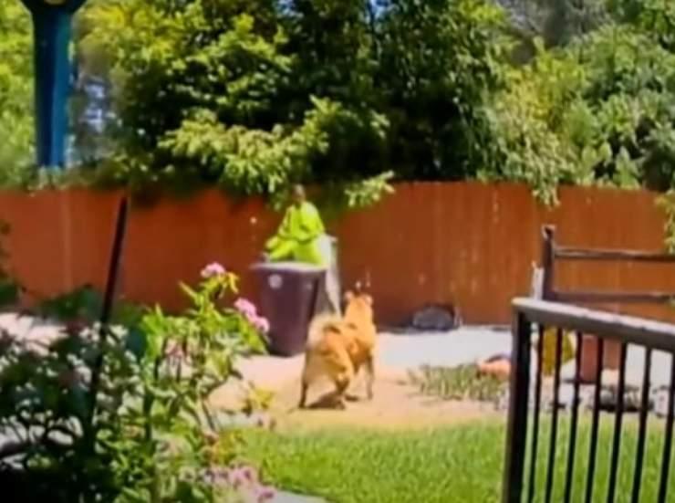cane salvato proprietaria aiuto netturbino