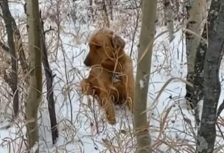 cane disperso neve tre giorni