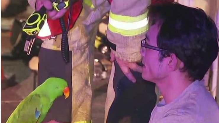 Pappagallo salva il suo proprietario dall'incendio imitando l'allarme
