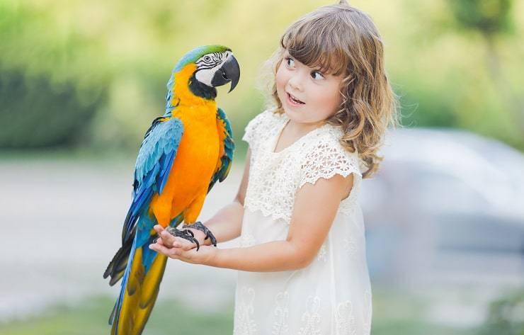 bambina pappagallo colorato