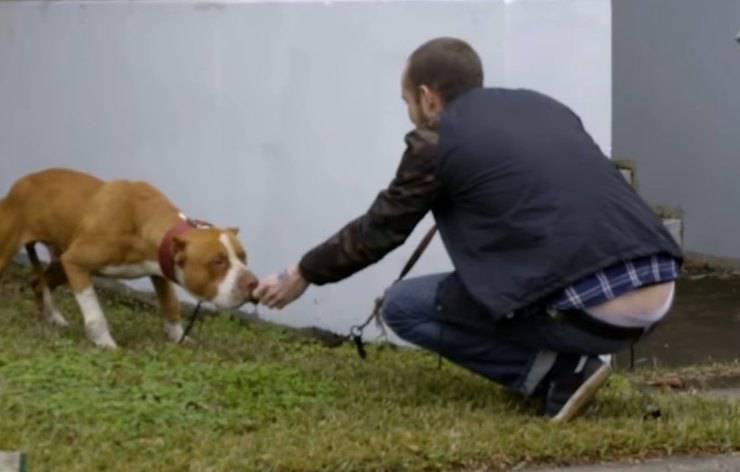 cane incatenato abbandonato chiesa