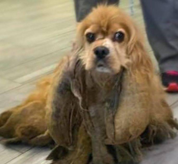 cane 2 chili pelo