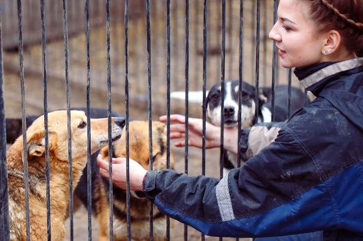 perché adottare un cane dal canile