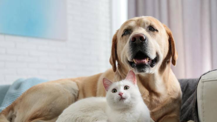 perché i cani si comportano come i gatti