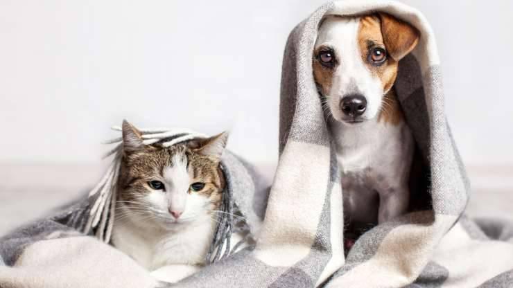 perché i gatti si comportano come i cani