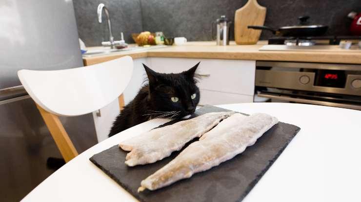 pesce surgelato al gatto