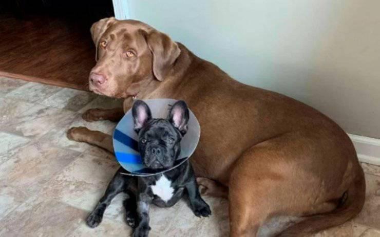 cagnolina preoccupata veterinario fratellino