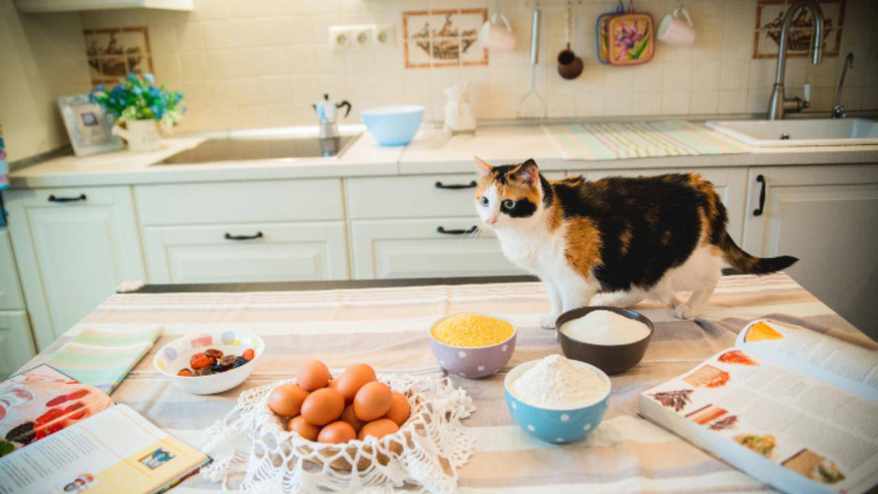 zuppe per gatti ingredienti