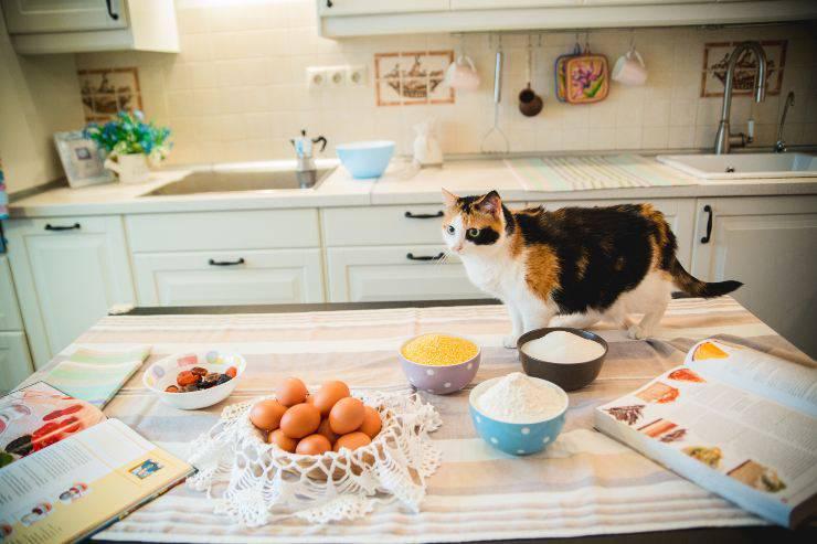 il gatto e le proteine