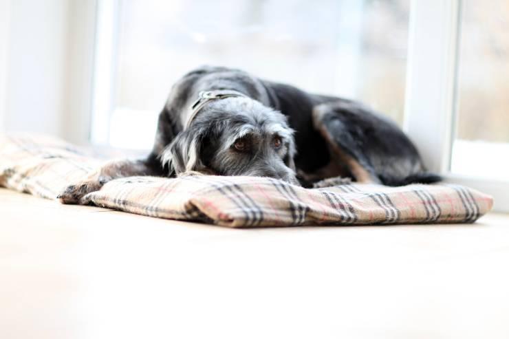 debolezze cane anziano