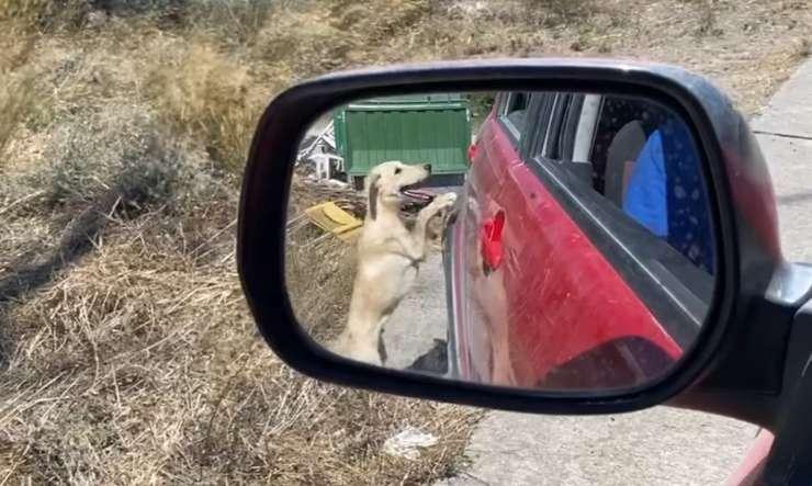 cane aiuto automobilista