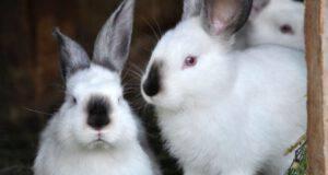 Razze di coniglio per bambini