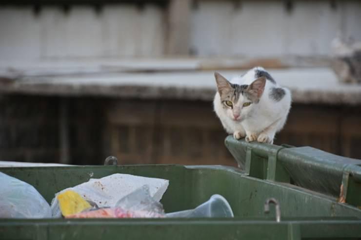 gatto tritarifiuti