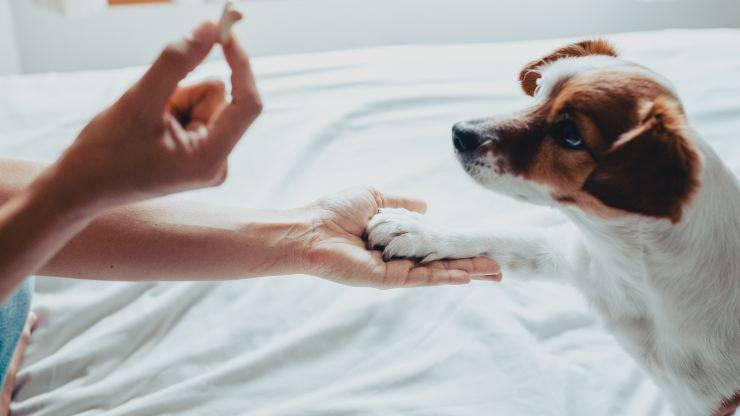 rinforzo positivo nel cane