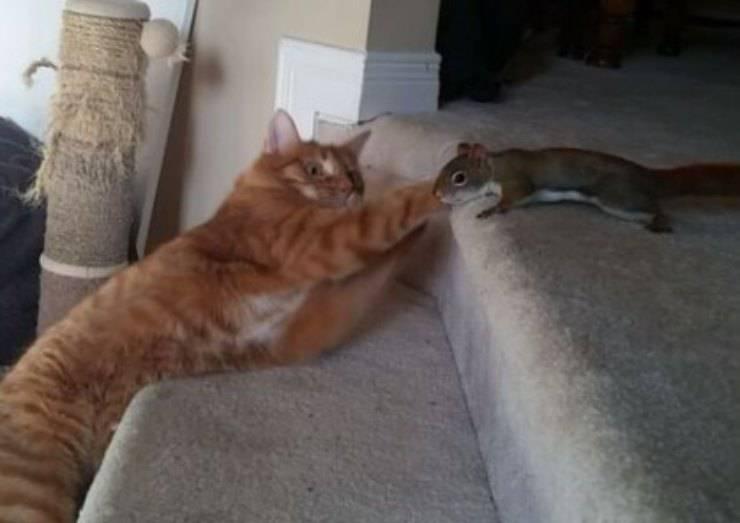 gatto scoiattolo amici