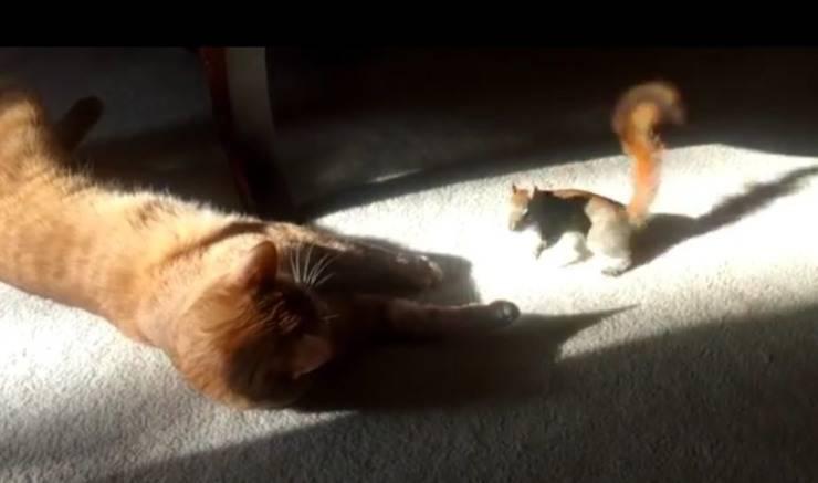 gatto scoiattolo amici per la pelle