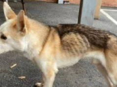 cane scomparso otto anni