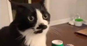 gattino sfida bottiglia