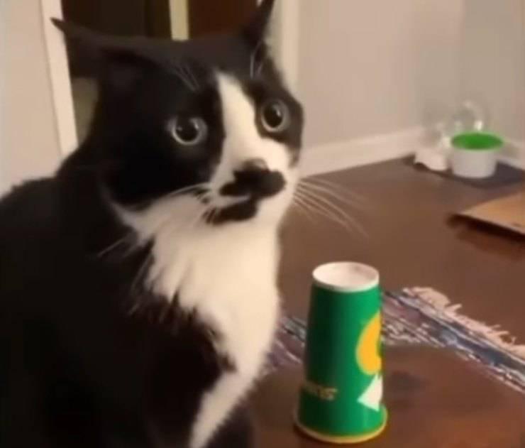 gattino sfida bottiglietta