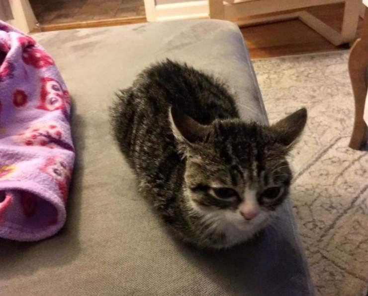 gatto abbandonato trova amico e famiglia