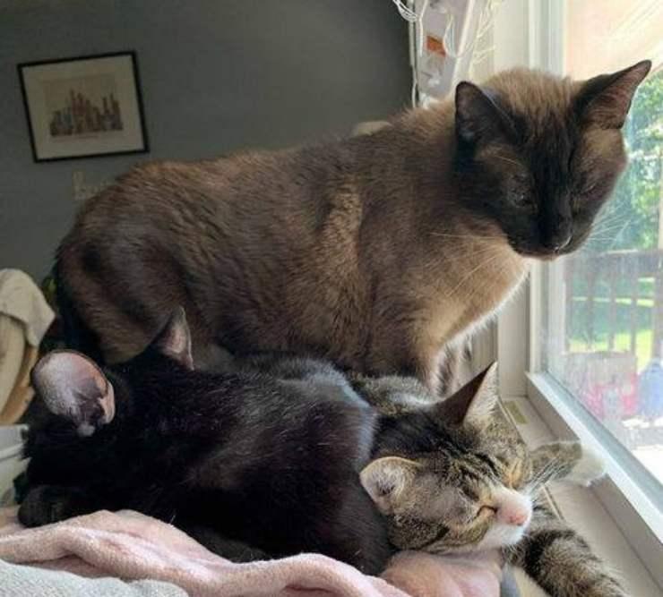 gatto abbandonato cerca famiglia e nuovo amico