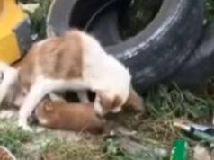 cagnolina cinque cuccioli immondizia