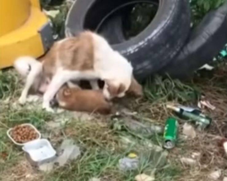 cagnolina 5 cuccioli immondizia