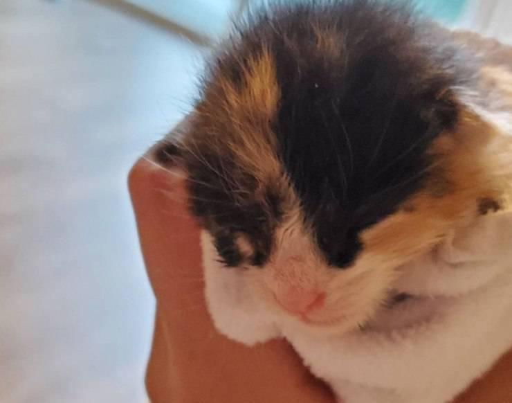 gattino abbandonato starbucks