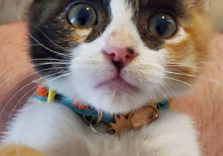 gatto abbandonato starbucks