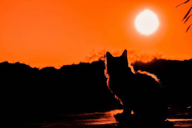 Gatto al tramonto (Foto Pixabay)