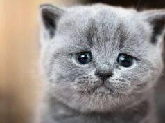 gatto depresso salvato 91 anni