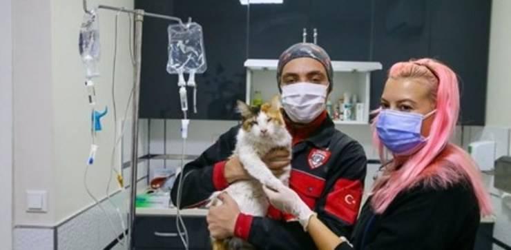 gatto turchia terremoto