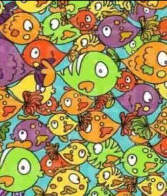 Test Visivo dei pesci