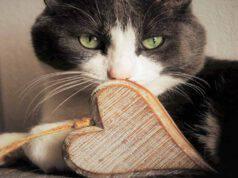 Infarto nel gatto
