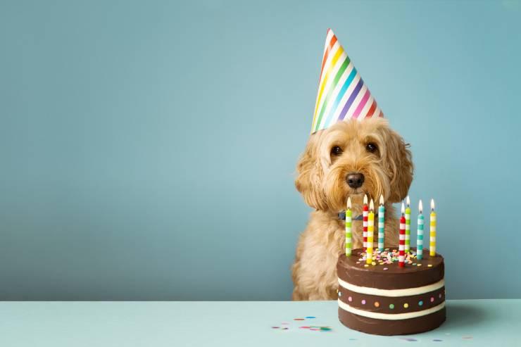 torte per cani