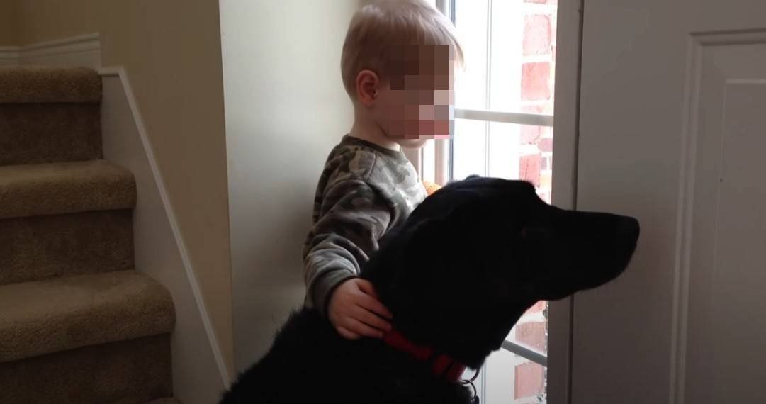 cane triste amico