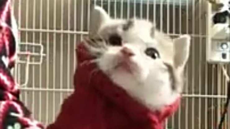 Un micio dolcissimo (Foto video)