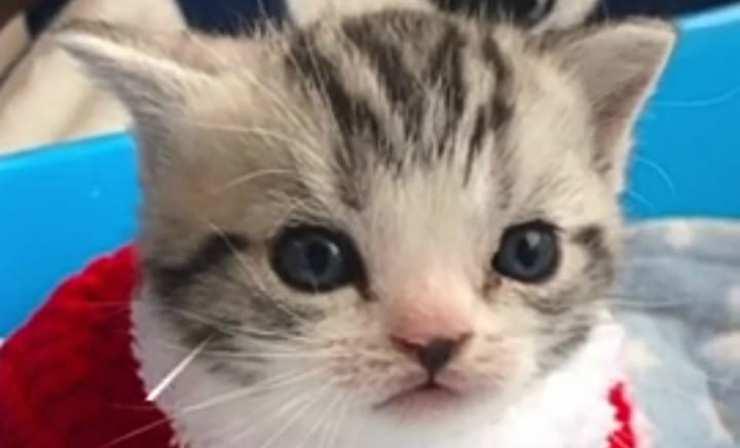Gatto in primo piano (Foto video)