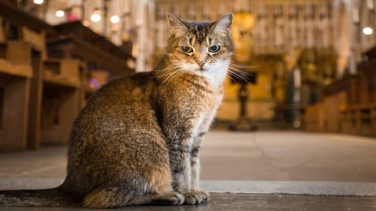 Prete celebra funerale gatto