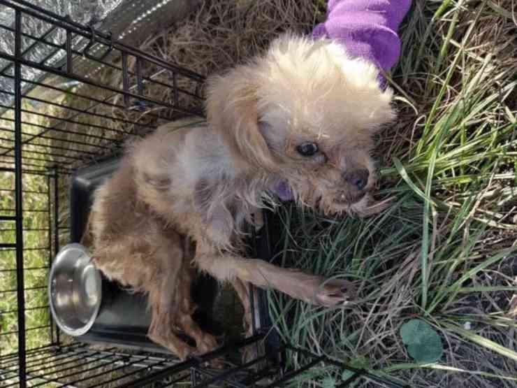 cane abbandonato bagno chimico