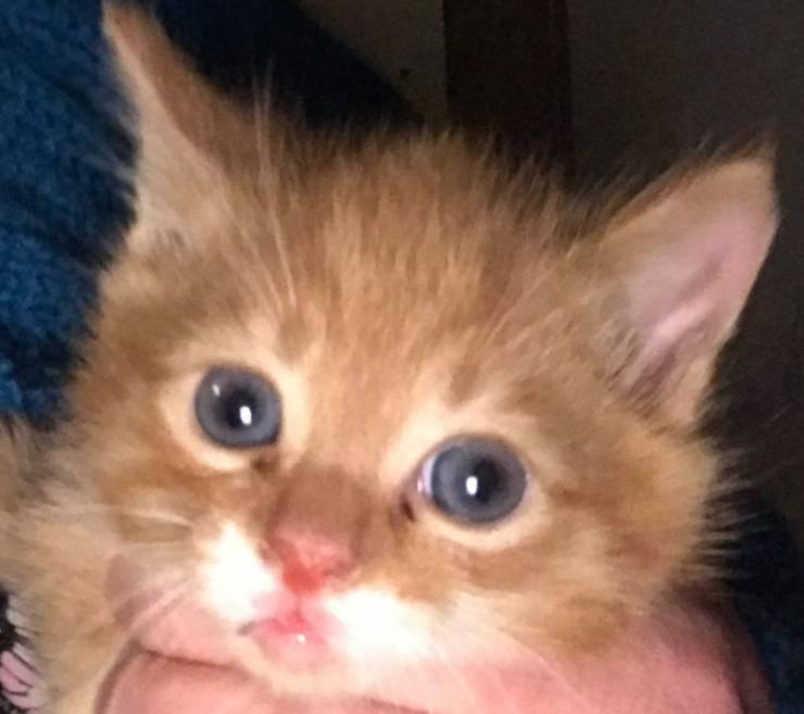 demoscono roulotte scoprono gattini mamma