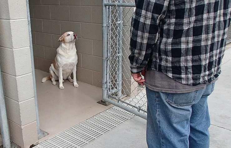 cane ritrova proprietario tre anni