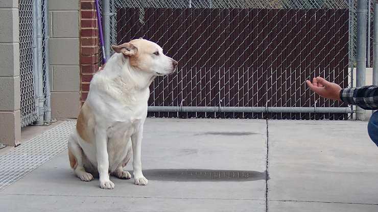 cane rivede padrone tre anni