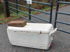 cuccioli abbandonato refrigeratore