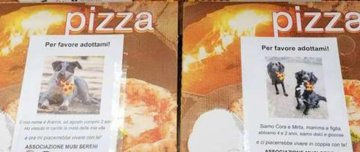 Gli annunci delle adozioni sulle scatole delle pizze (Foto di Catia)