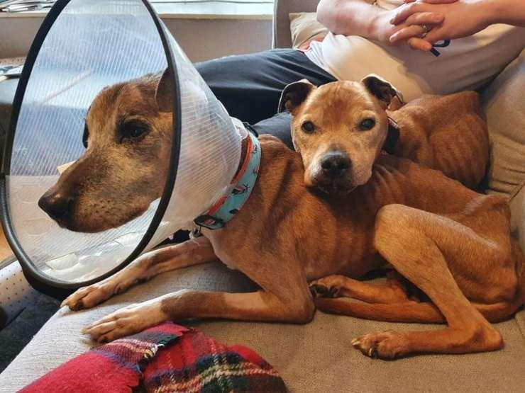 due cani sopravvivono 3 settimane