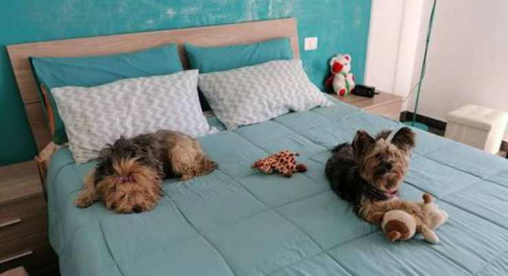 Emy e Kira (Foto di Catia)